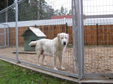 вольер для крупных собак фото