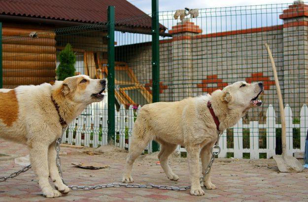 вольеры для собак из сетки фото
